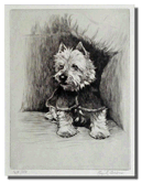 Scotty Dog by Cecil Alsin